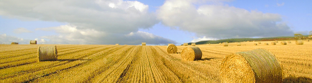 Сельскохозяйственные земли в Московской области
